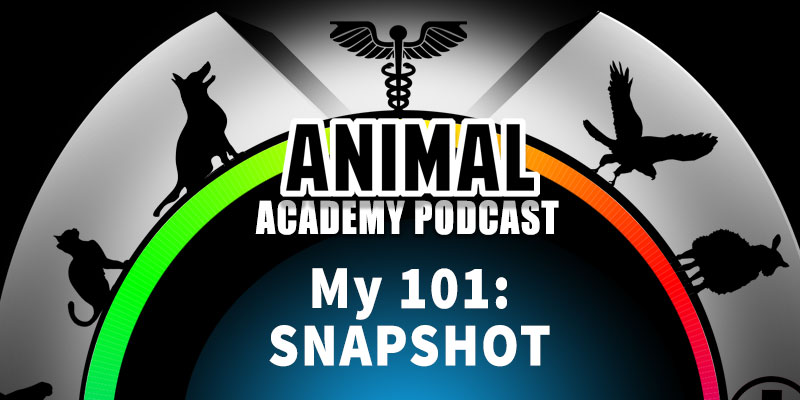Animal Academy Podcast: My 101 Snapshot