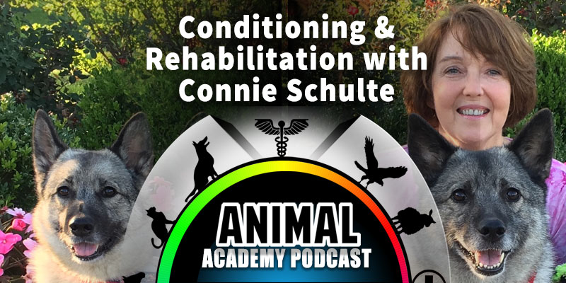 Animal Academy Podcast: Conditioning & Rehabilitation with Connie Schulte