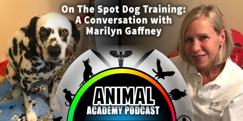 On The Spot Dog Training: A Conversation with Marilyn Gaffney