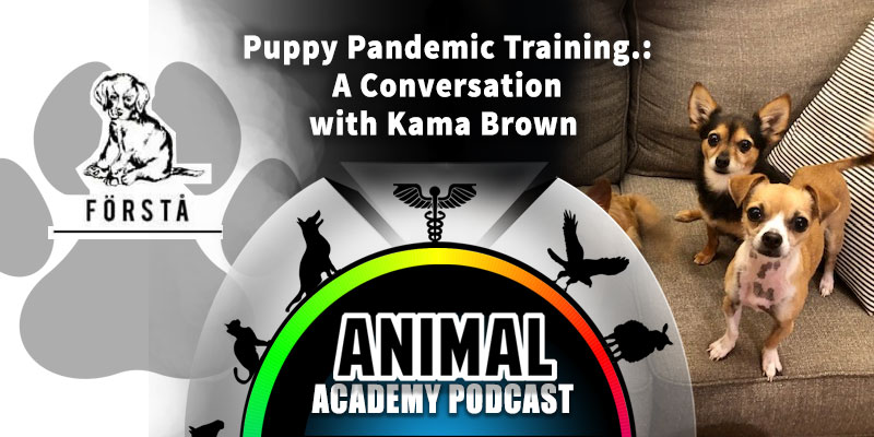 Animal Academy Podcast: Pandemic Puppy Training: A Conversation with Kama Brown