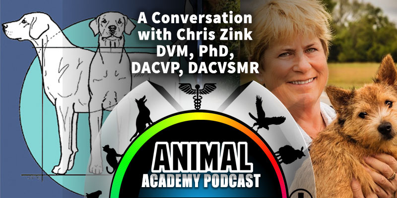 Animal Academy Podcast: A Conversation with Chris Zink DVM, PhD, DACVP, DACVSMR