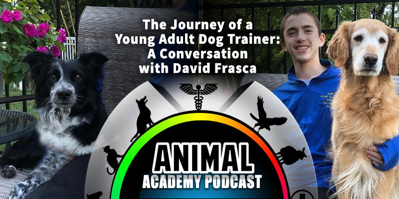 Animal Academy Podcast: The Journey of a Young Adult Dog Trainer: A Conversation with David Frasca